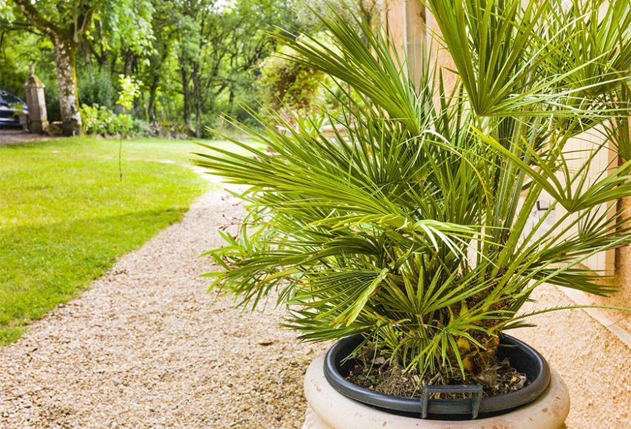 Quelle plante extérieur sans entretien ?
