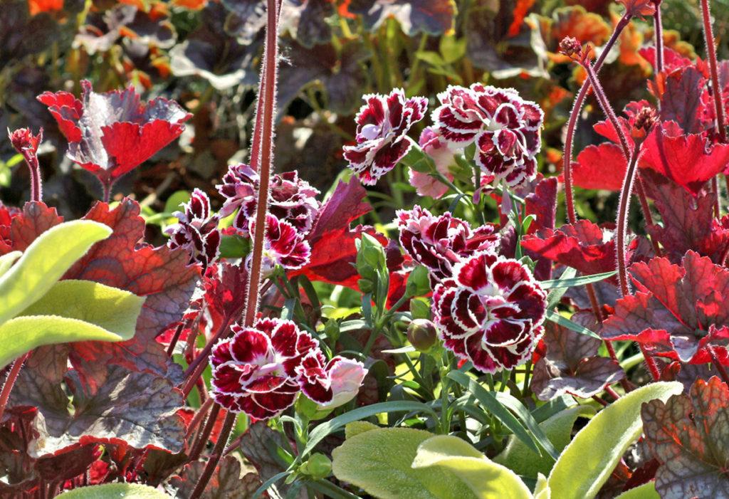 Quelle fleur repousse chaque année ?
